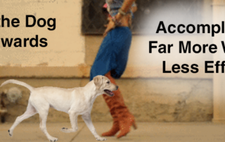 walk-the-dog-backwards